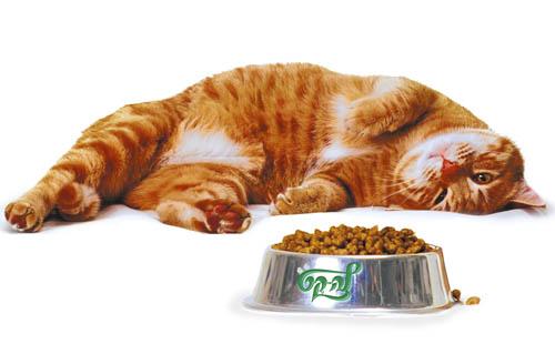Сухой корм для кошки
