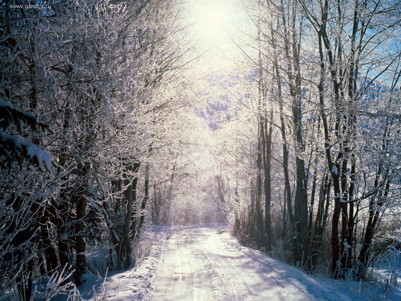 Зимний пейзаж свода деревьев